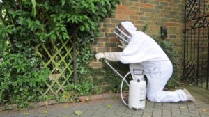 wasp control experts