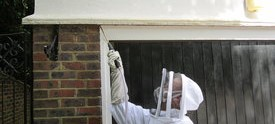 Wasp nest removal experts in Oxshott